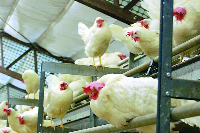 sample Poultry Business Plan in Nigeria