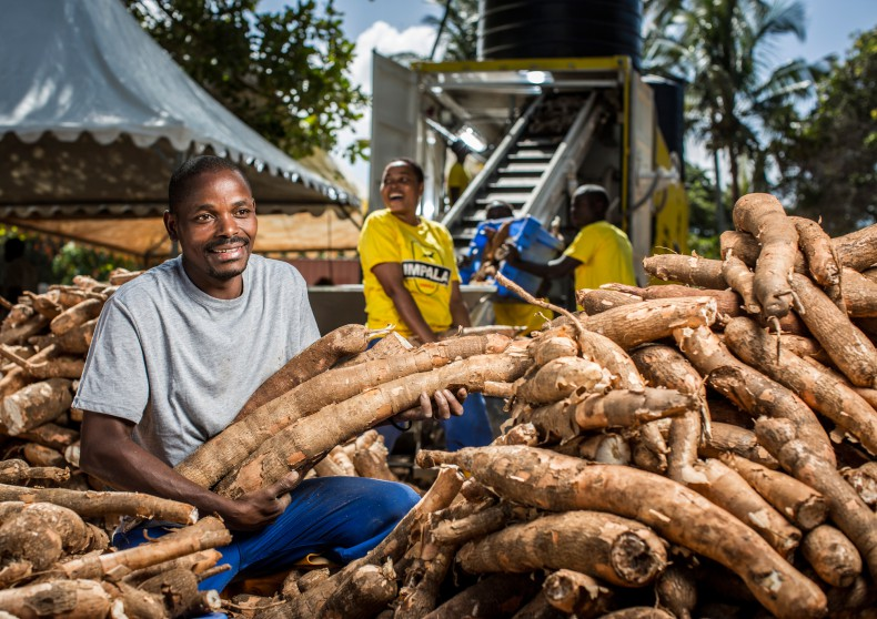 CASSAVA PROCESSING BUSINESS PLAN IN NIGERIA