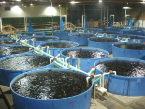 FISH FARMING AND PROCESSING BUSINESS PLAN IN NIGERIA