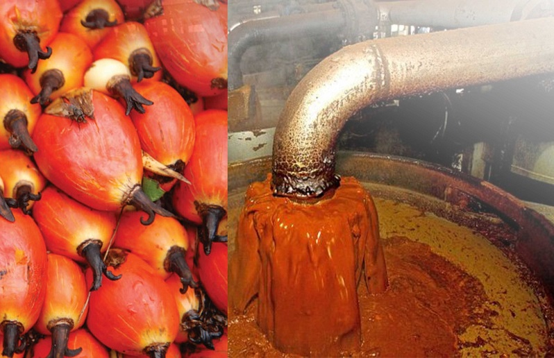 PALM OIL FARMING AND PROCESSING BUSINESS PLAN IN NIGERIA