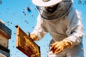 BEEKEEPING AND HONEY PRODUCTION BUSINESS PLAN IN NIGERIA