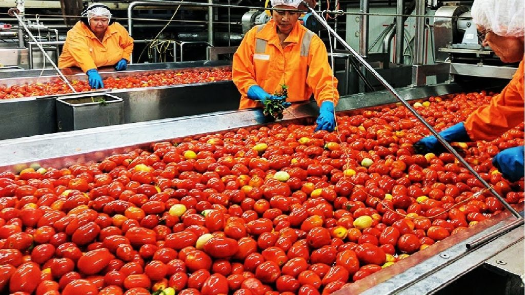 TOMATO PROCESSING BUSINESS PLAN IN NIGERIA