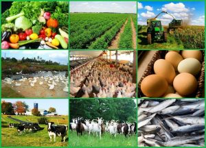 INTEGRATED AGRIBUSINESS PLAN IN NIGERIA,